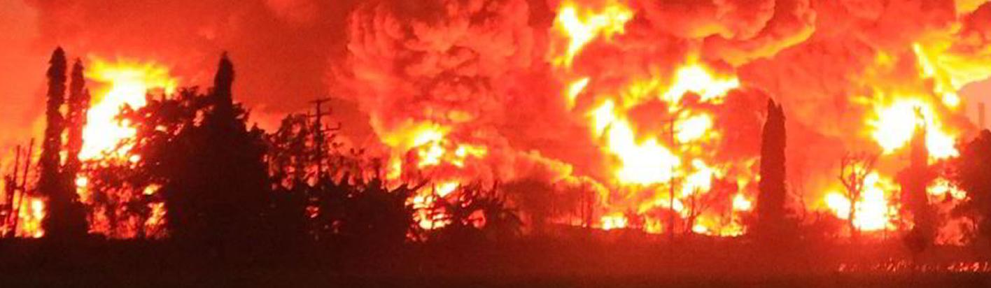 burning trees for the plantation